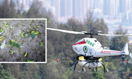 浏阳用无人机喷药,绿虫纷纷跌下树