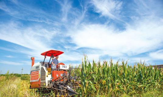 """龙伏""""三一""""工程春玉米测产,平均亩产超过600公斤"""