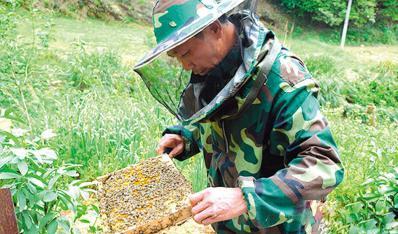背靠专业合作社,养蜂养虾都有帮手