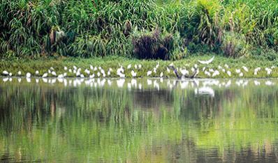 成群候鸟小又怎么可能成功憩长兴湖