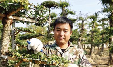 村上建起土地合作社支持貧困戶發展花木產業