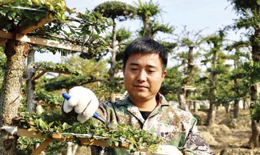 村上建起土地合作社支持贫困户发展花木产业